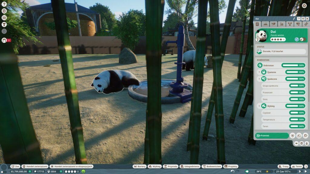 pandy na wybiegu w Planet Zoo