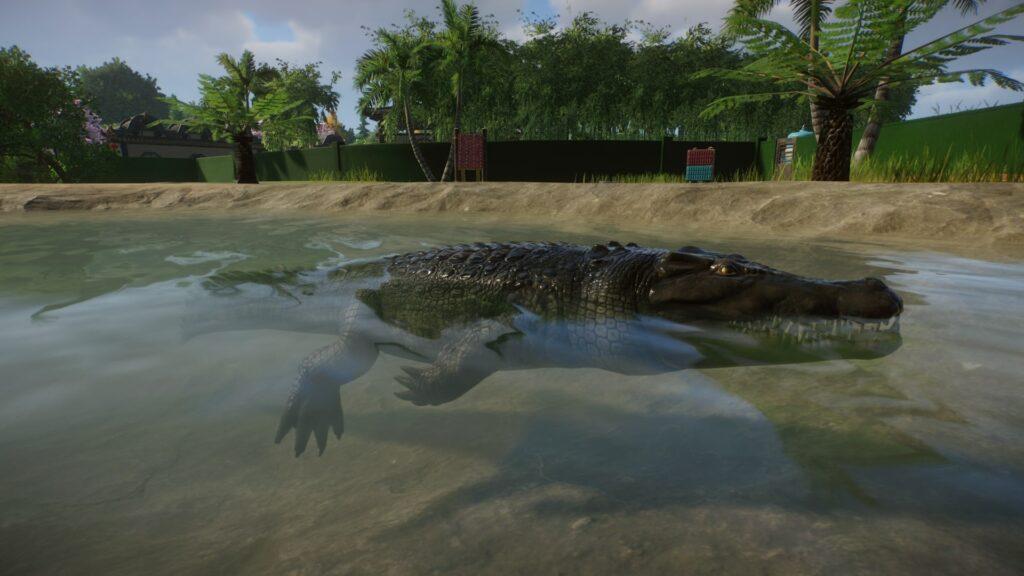 Krokodyl w trybie kamery