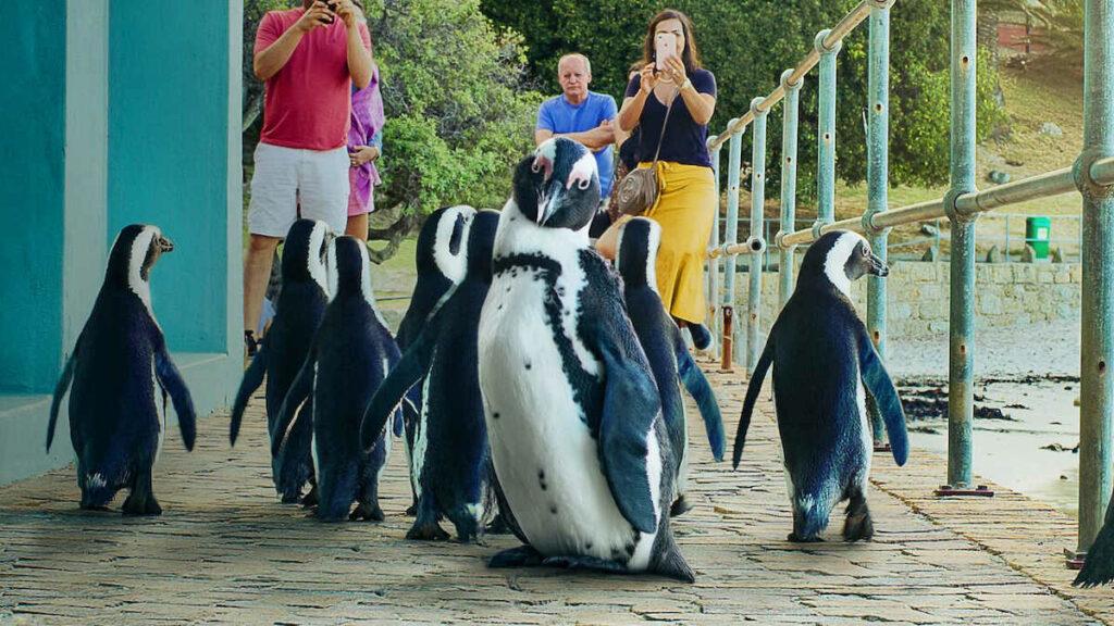 Materiał promocyjny filmu Penguin Town