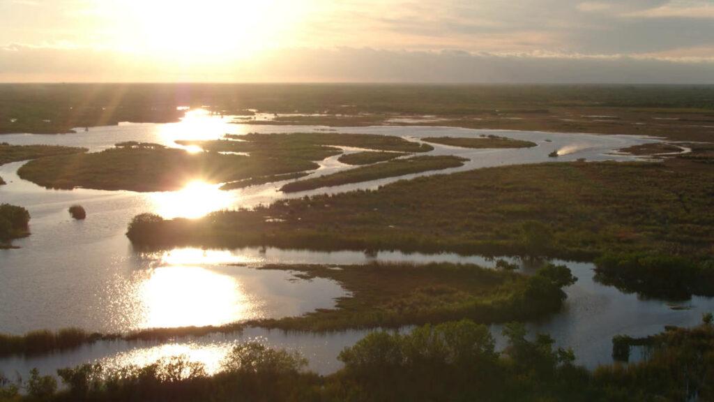 Zdjęcie bagien Everglades